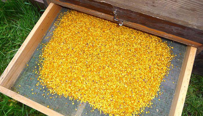 Wissen zu Bienen Honig sowie Bienenprodukte - Blütenpollen in Box