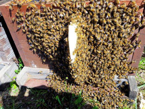(Imker) Imkerei die Allgäuer Wander-Imkerei leckerer Honig sowie Bienenprodukte und -Kosmetik aus naturbelassen Standorten