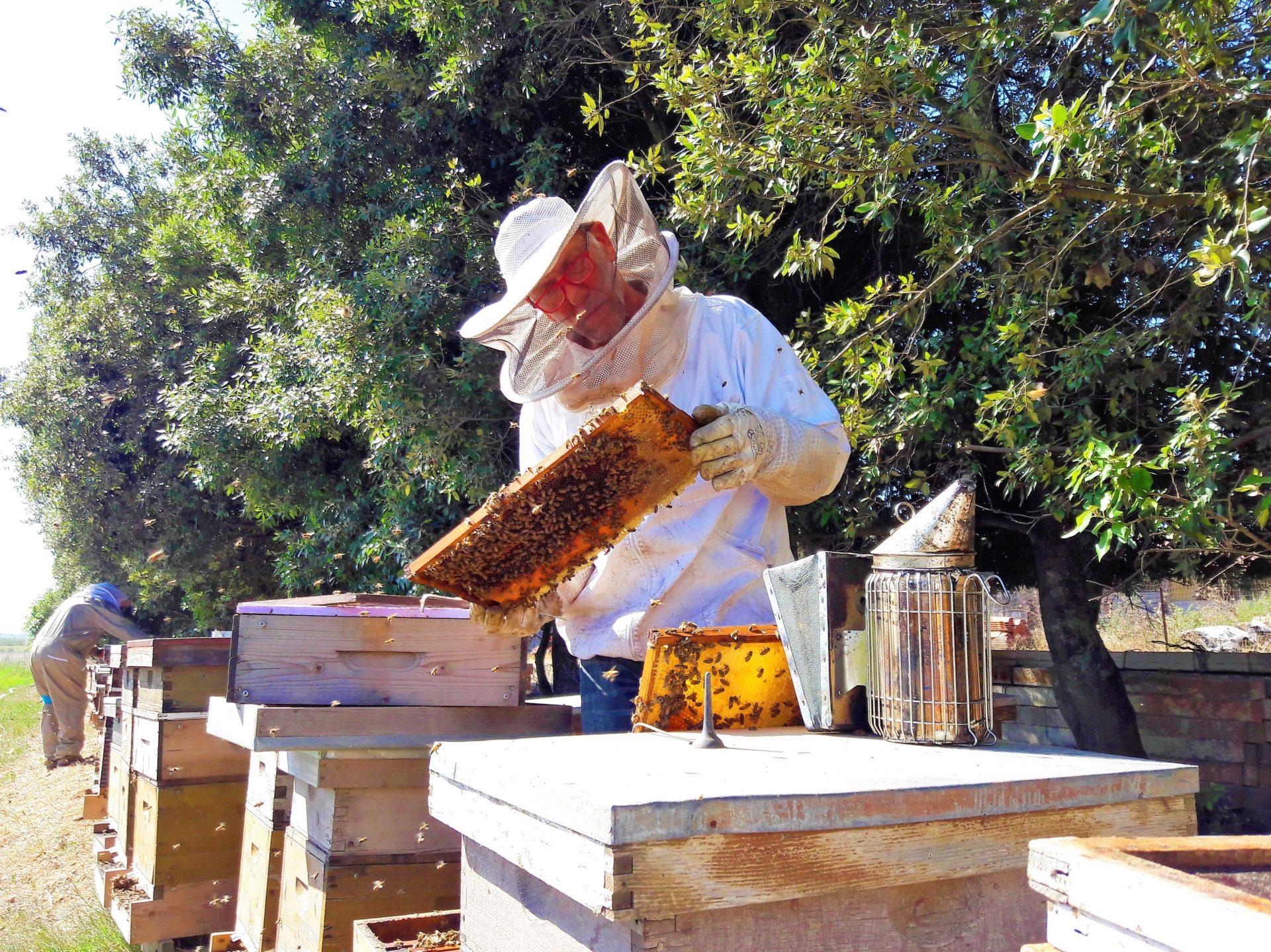 Imker-Imkerei-Entnahme der Bienenwaben