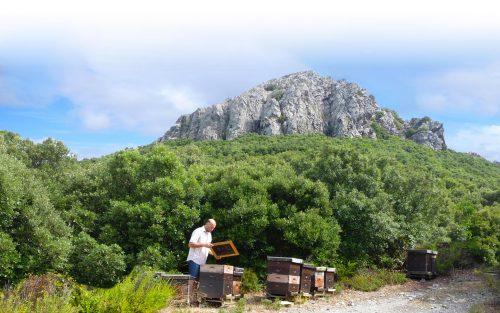 Europäischen Honig direkt vom Imker kaufen