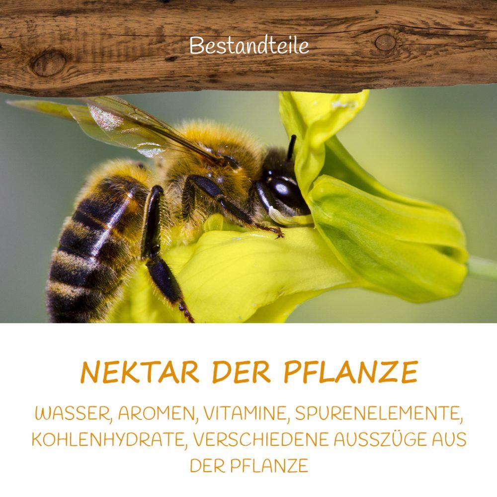 Honig Direkt Vom Imker Ihrer Allgäuer Wander Imkerei Aus Dem Allgäu BESTANDTEILE 13